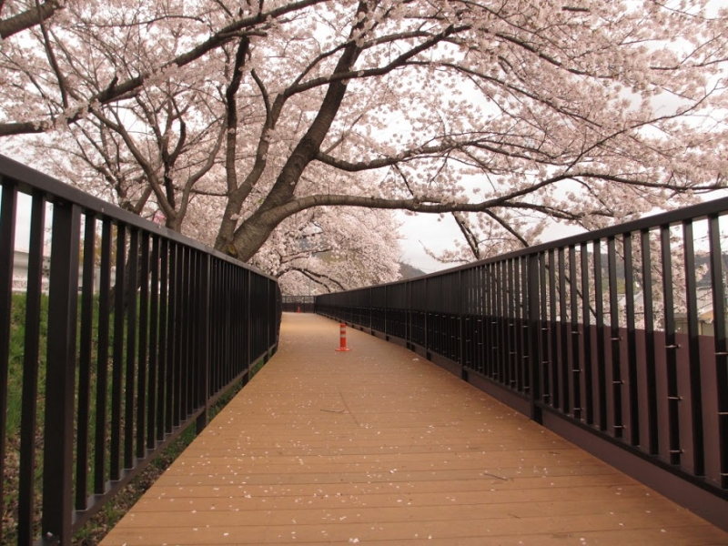 井手町遊歩道(京都府)