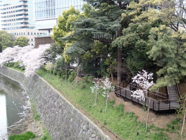 紀尾井の森(東京都)