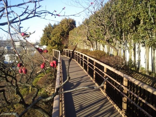 池上梅園(東京都)